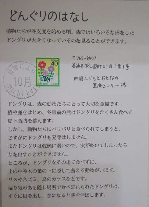 ドングリの手紙 28.11.4