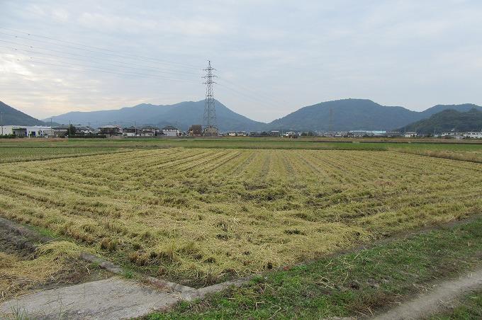 糯米稲刈り終わり 28.10.31