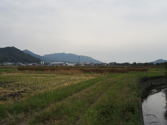 ハデ掛けのお米 隣の田んぼ 28.10.31