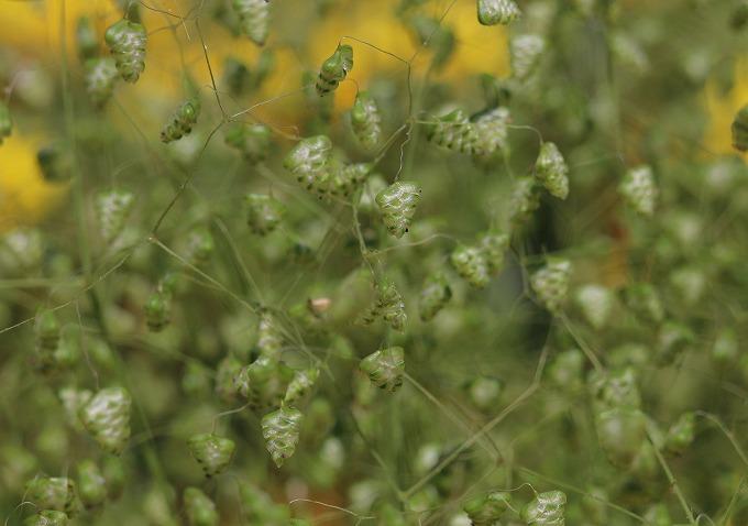可愛い草です 28.5.12