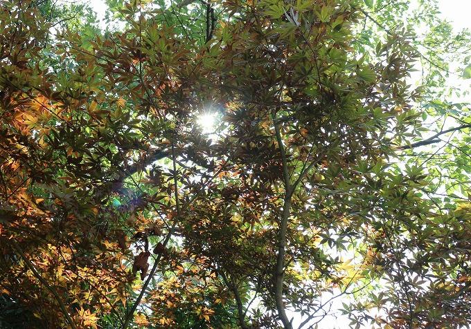 楓 夏から秋へ 28.10.2