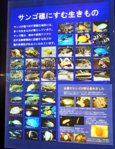 3日鳥羽水族館 (25)_resized