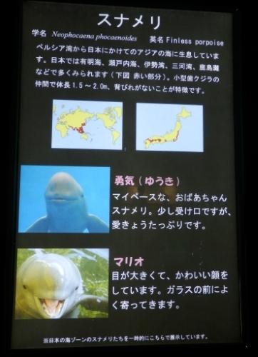 3日鳥羽水族館 (46)_resized