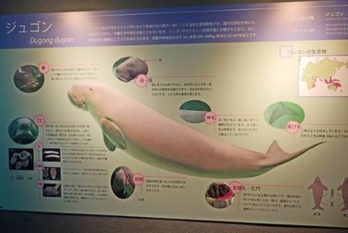 3日鳥羽水族館 (47)_resized