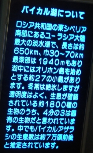 3日鳥羽水族館 (50)_resized