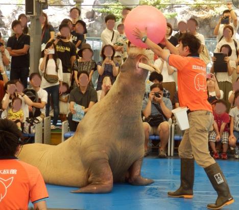 3日鳥羽水族館 (55)_★