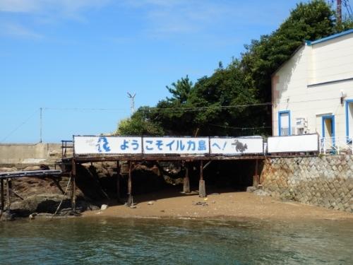 3日イルカ島 (13)12:35_resized