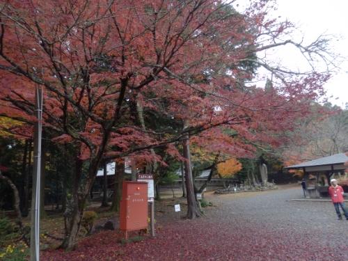 鶏足寺と己高庵間 (11)_resized
