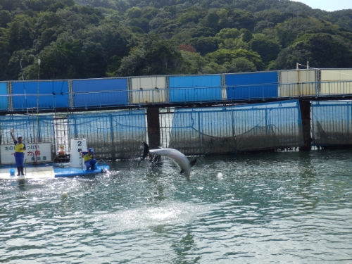 3日イルカ島 (54)_resized