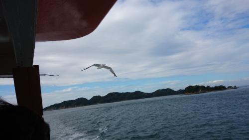 3日イルカ島カモメ (6)_resized