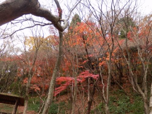摂津峡 (8)_resized