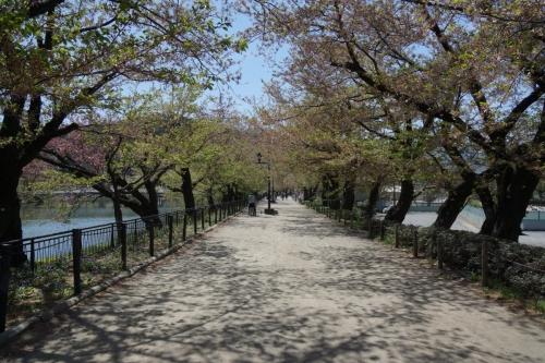 2桜は? (1200x800)