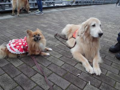救助犬とツーショット