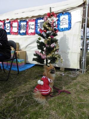 愛犬と運動会
