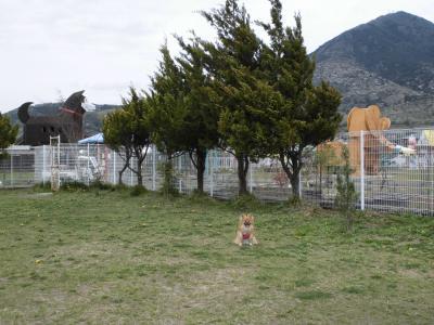 大型犬用のドックラン
