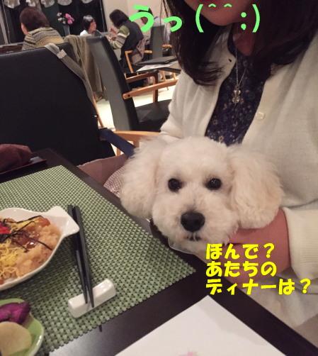 てこねみゆ1A