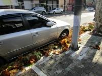 大邱 街路樹 落ち葉