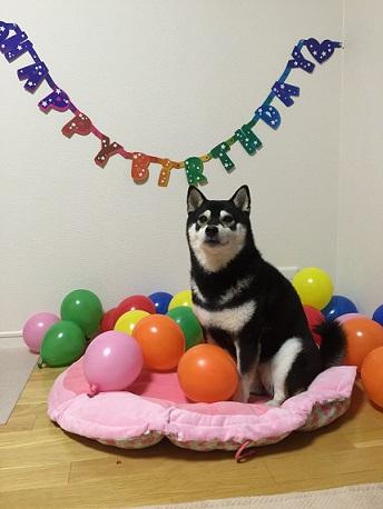 ハル8歳お誕生日