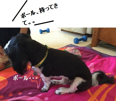 IMG_20160925amoji.jpg