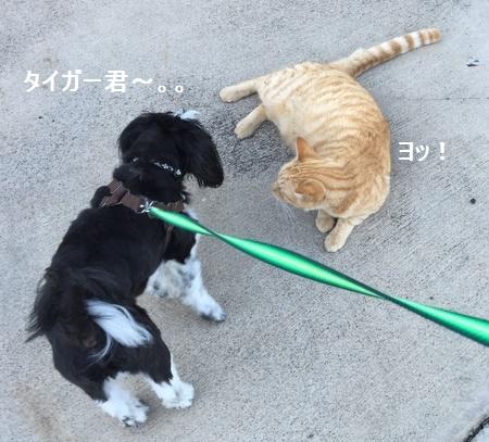 IMG_6496moji.jpg