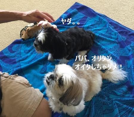 IMG_6525moji.jpg