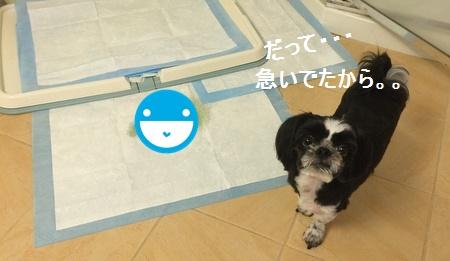 IMG_6775facemoji.jpg