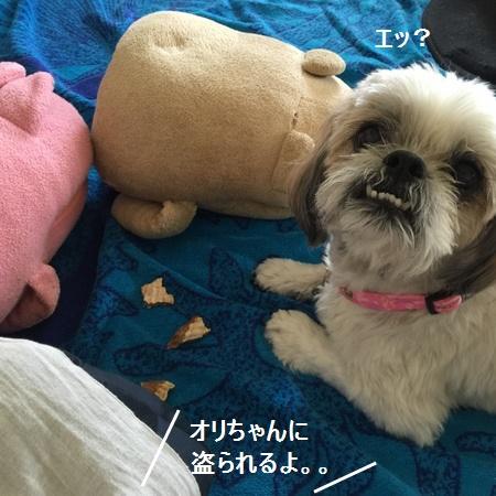 IMG_6798moji.jpg