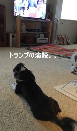 IMG_7143moji.jpg