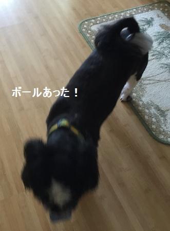 IMG_7343moji.jpg
