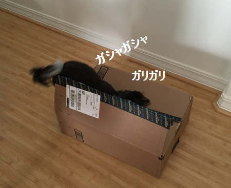 IMG_7353moji.jpg