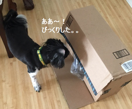 IMG_7354moji.jpg