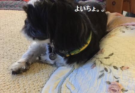 IMG_7625moji.jpg