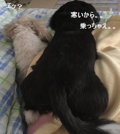 IMG_7832moji.jpg