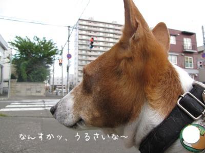 th_IMG_1585.jpg
