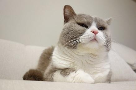 20161130猫スポンジ3
