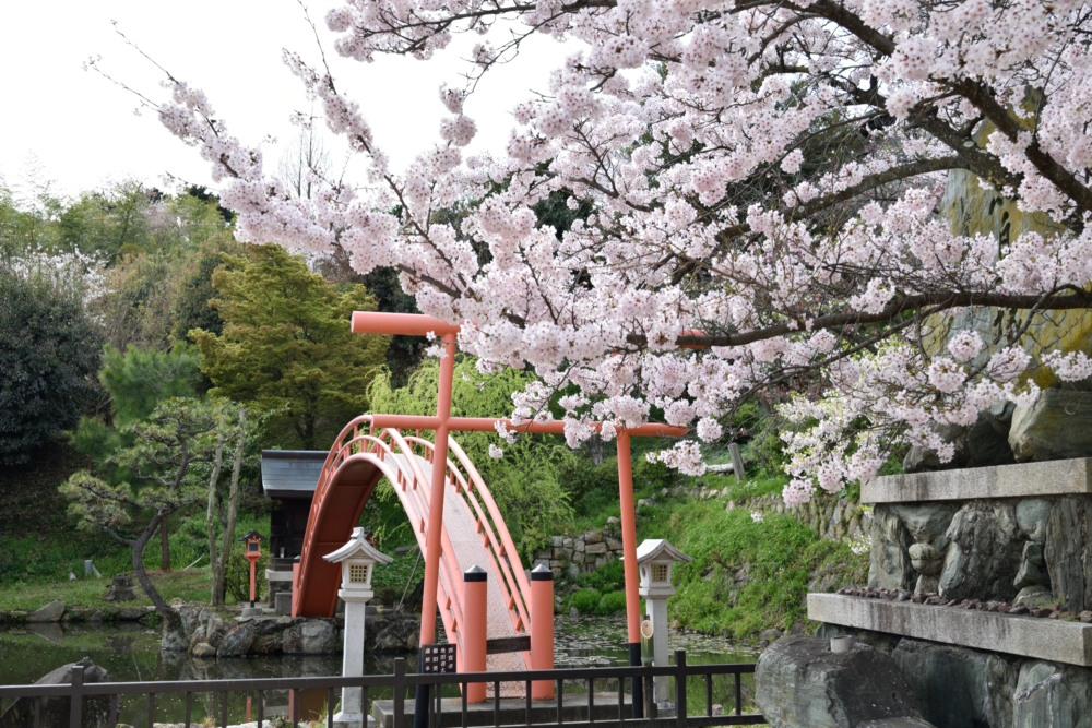 DSC_6403_桜と池DSC_6403