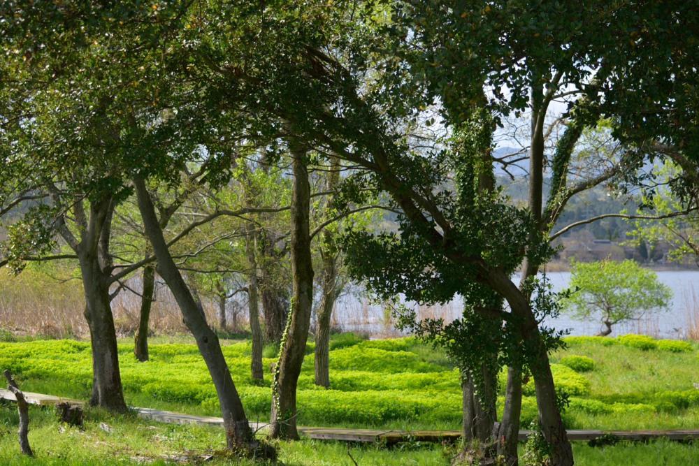 樹と群生DSC_8344