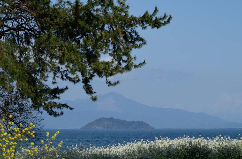松と竹生島
