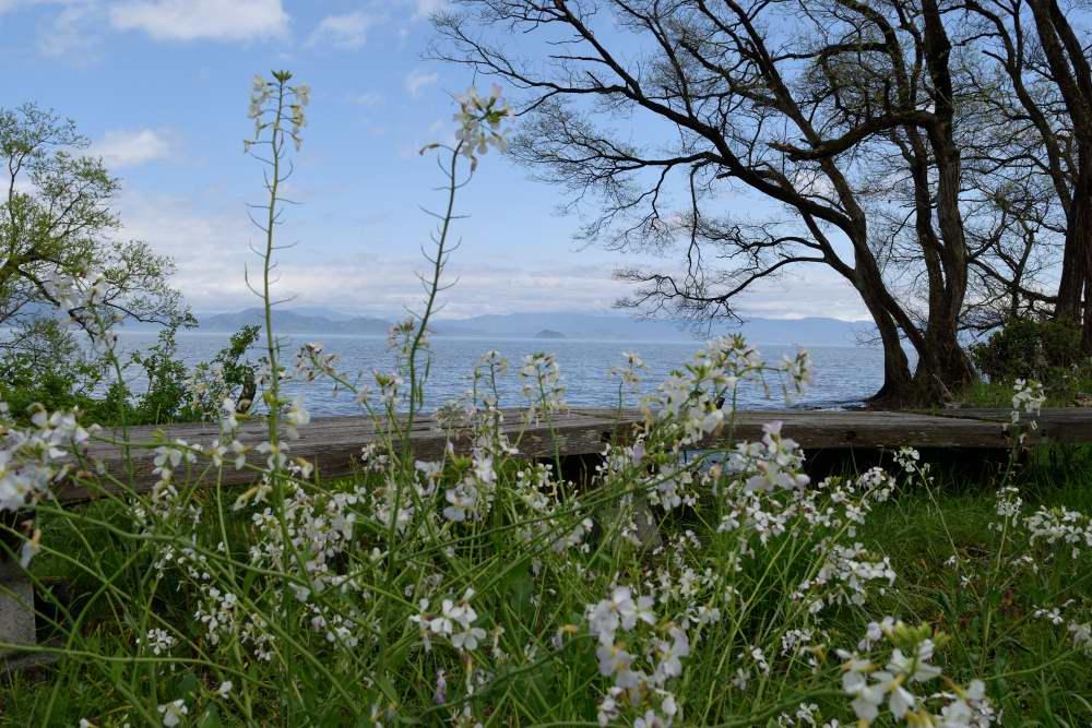 琵琶湖DSC_8105