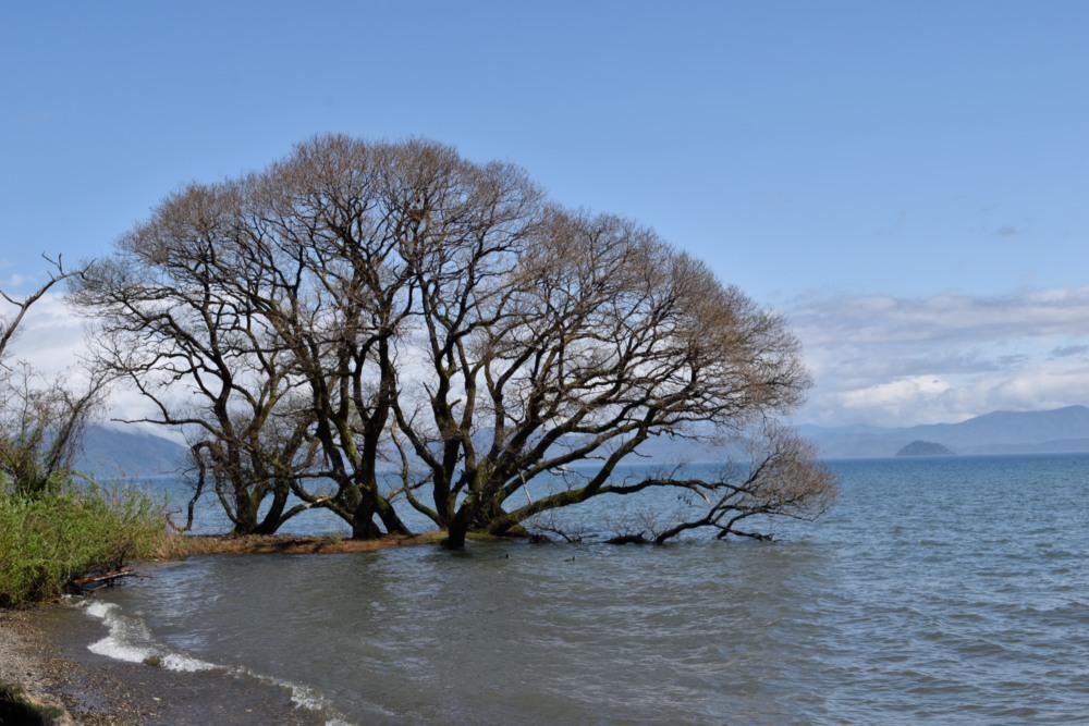 琵琶湖DSC_8061