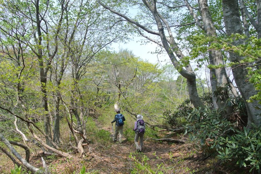 山歩きDSC_3400