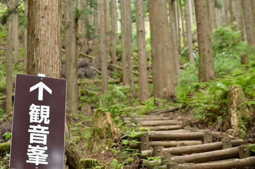 橋 山歩きDSC_9302