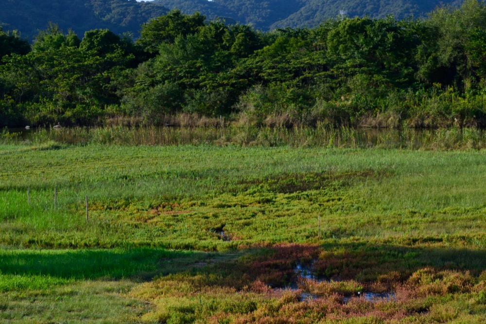 サンゴ草風景DSC_1041