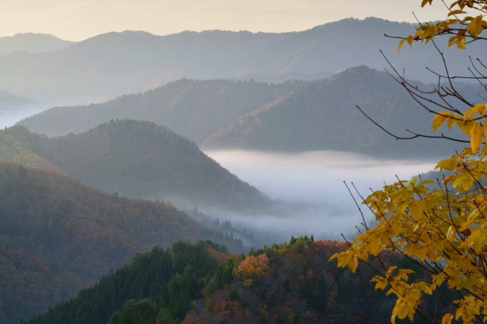 小入峠朝日が昇った雲海DSC_2661