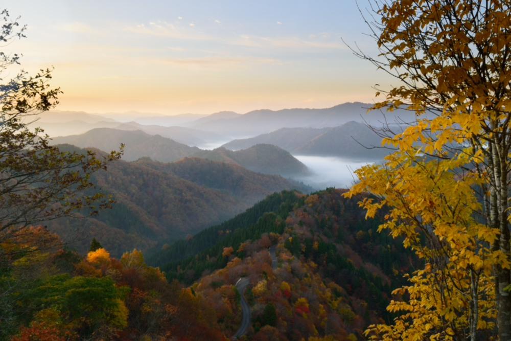 小入峠朝日が昇った雲海と紅葉DSC_2636
