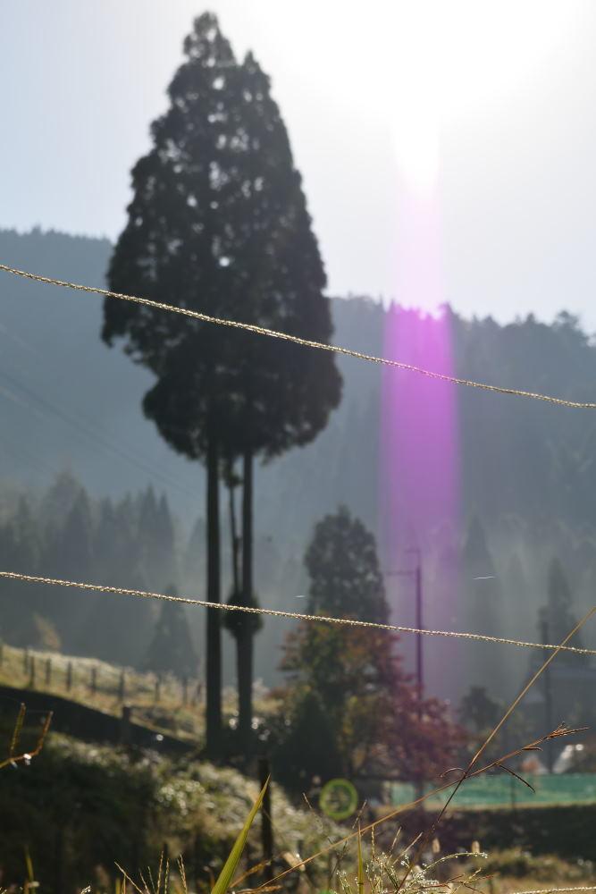 杉林色が差し込んでDSC_2851