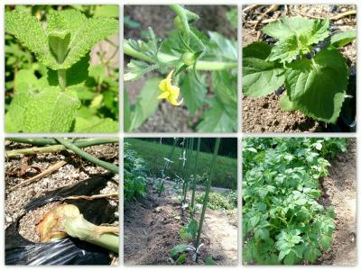 小さな農場の野菜