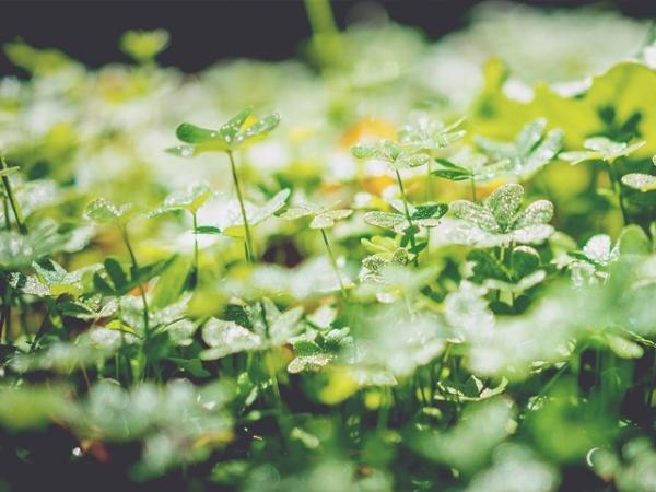 植物の知性2
