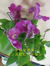 IMG_4838.jpg