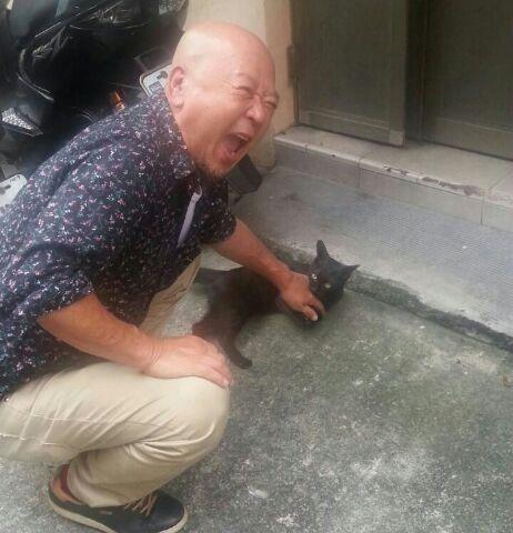 台湾猫-1